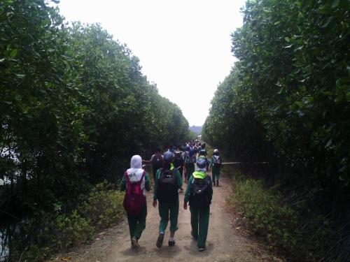 Berjalan di antara keteduhan pohon bakau